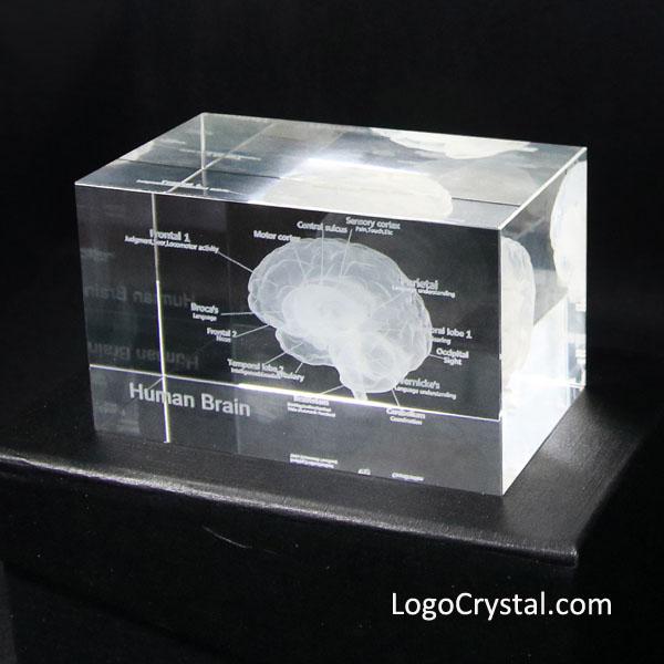 Modello anatomico umano del laser 3D Cervello inciso al laser Cubo di vetro di cristallo Anatomia Neurologia mentale Pensiero Regalo di scienza medica, Questo bellissimo cristallo mostra un'immagine tridimensionale del cervello umano